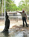 Crocodile feeding, Billabong Sanctuary.jpg