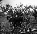 Cultivador de trigo.jpg