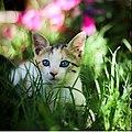 Cute kitten!.jpg