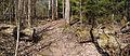 Cutted tree on Tourujoki nature trail.jpg