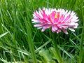 Cvetko - panoramio.jpg