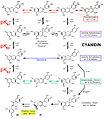 Cyanidin - Farbstoff pH-Abhaengigkeit.jpg