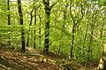 Cycle track in Plymbridge Woods (4569).jpg