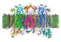 Cytochrome C Oxidase 1OCC in Membrane 2.png