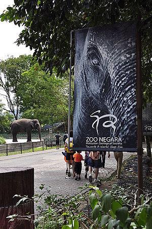 National Zoo of Malaysia - Elephant in Negara Zoo 2011