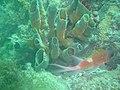 DSC00114 - recifes de coral - Naufrágio e recifes de coral no Nilo.jpg