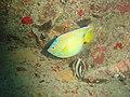 DSC00251 - peixe - Naufrágio e recifes de coral no Nilo.jpg