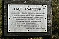 Dab Papieski, Dabrowka Koscielna (2).JPG