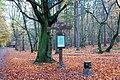 Darsser Wald Grosser Stern 01.JPG