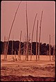 Dead Trees near the Holding Ponds of Olin-Mathieson Plant, 06-1972 (3703564455).jpg