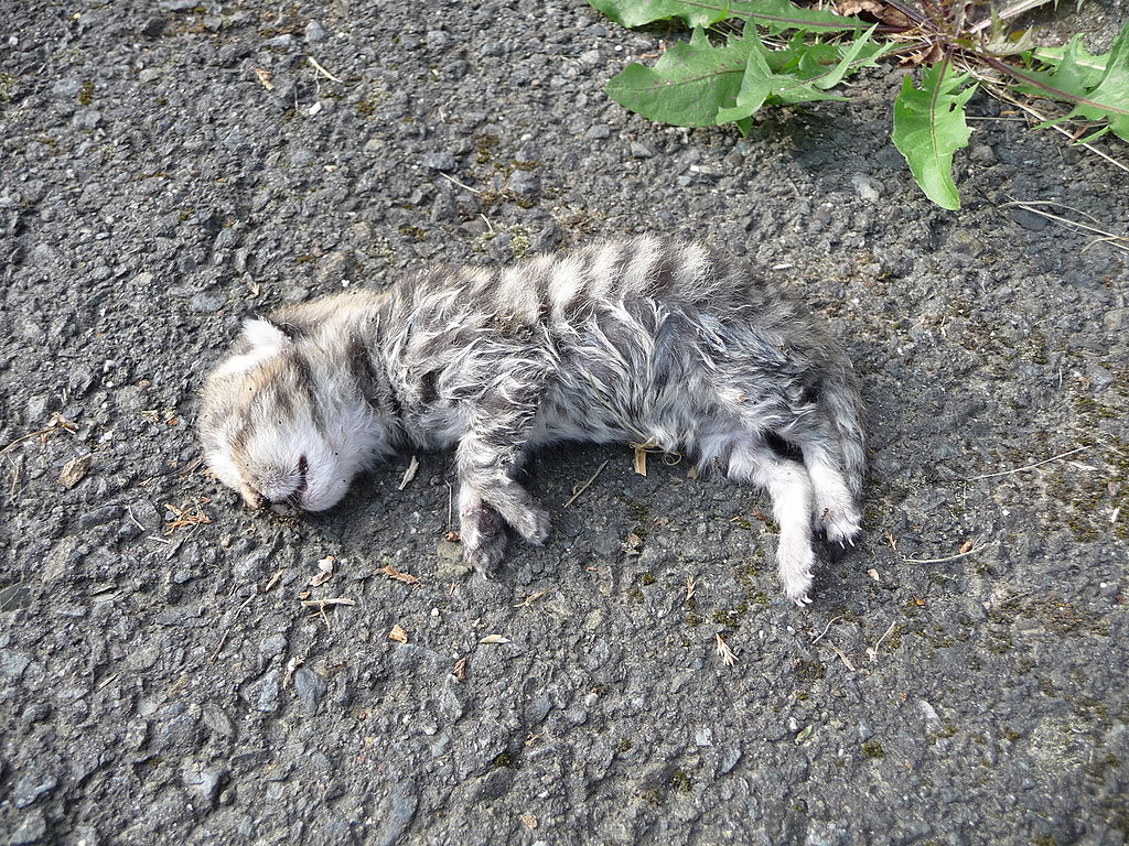 What To Do Witha Dead Pet Cat