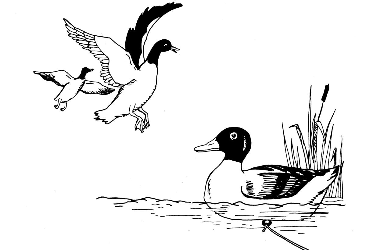 Der Lockvogel Arte
