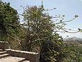 Delhi-Rajasthan 8-6-12 to 12-6-12 152.JPG