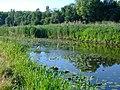Desenka river 5.jpg