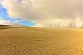 Desert field.jpg