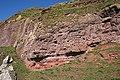 Devonian Rocks - geograph.org.uk - 395163.jpg
