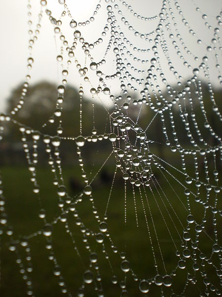 File:Dew on a spiders web 2.jpg