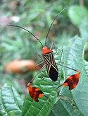 DirkvdM aerobics-insect.jpg