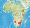 Distribution map Spirostachys africana.jpg