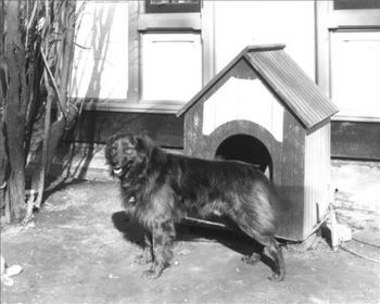 A wooden doghouse. This dog is Dash outside of...