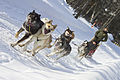 Dog Sled Rides (6836608704).jpg