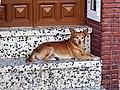 Dog in Álora.jpg