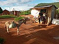 Donkey as means of transport in Chemba District,Tanzania.jpg