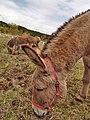 Donkeys-03.jpg