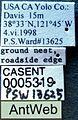 Dorymyrmex insanus casent0005319 label 1.jpg