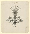 Drawing, Design for Flowers as Hair Dress, late 18th century (CH 18553079).jpg