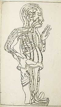 Drawing of the human body showing acupuncture meridians..JPG