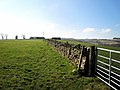 Dry stone Wall running up to Ardoch Farm - geograph.org.uk - 375305.jpg
