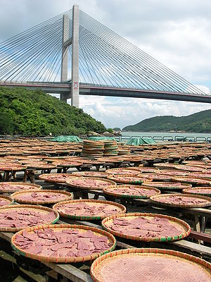 Shrimp fishery - Shrimp paste drying below the Kap Shui Mun Bridge, Hong Kong