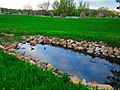 Ducks in a Retention Pond - panoramio.jpg