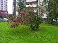 Dzerzhinsky, Moscow Oblast, Russia - panoramio (20).jpg