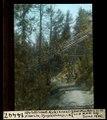 ETH-BIB-Waldbrand-Reste (24.VII.1945) St. Moritz, Olympiaschanze, von Westen-Dia 247-14447.tif