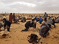 Ecole primaire Ras El Oued 09.jpg