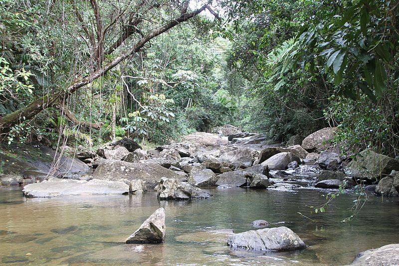 File:El Yunque nat park Rio Sabana (Rio Blanco) PR IMG 2088.JPG