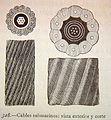"""El mundo físico, 1882 """"Cables submarinos - vista exterior y corte"""" (4074165421).jpg"""