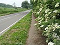 Elderflower In Full Bloom - geograph.org.uk - 834260.jpg