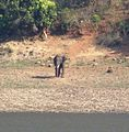 Elephant Gobi.jpg