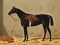 Emil Volkers - Black Horse in the Stable.jpg