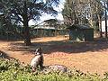Emus and wallabies at Tropiquaria.JPG