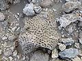 Ethiopie-Danakil-Fossiles (7).jpg