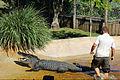 Everglades, Miami (8253573316).jpg