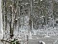 FL Swamp in Snow (5303606791).jpg