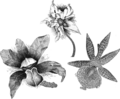 Farnham Orchid brooches.png