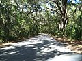 Fernandina Beach FL Fort Clinch road01.jpg