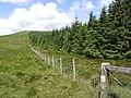 Field-woodland boundary - geograph.org.uk - 508044.jpg