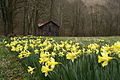 Field-yellow-spring-wild-flowers - West Virginia - ForestWander.jpg